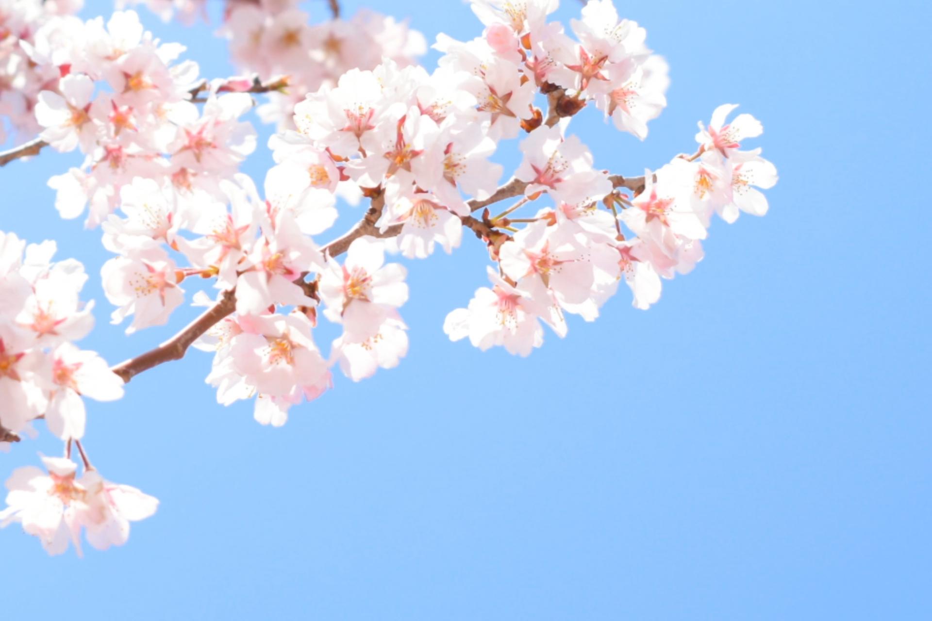 ひまわりデンタルクリニック_3月4月の休診について